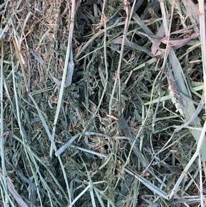 5×4 Vetch/wheaten Hay Round Bales