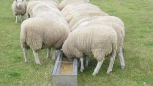 "Five Star Stock Feeds ""Lamb Grower Pellets""."