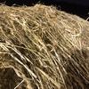 oaten/clover hay