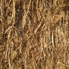 80 Bales of Header Trail Oat Straw