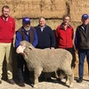 Ramsgate Poll Merino top of $4600