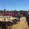 Lamb yarding smaller, much plainer offering but prices up at Bendigo