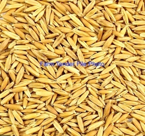 Oats  For Sale 25 mt