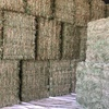 Clover Hay Small Squares in Barron Packs