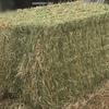 Barley Hay 8x4x3 -- 625 x 580 KG Approx New season Bales With Great Feed Test