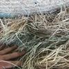 1200 Rhodes Grass 4x4 Bales