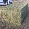 25:NDF  Steamed New Season Vetch Hay For Sale in 8x4x3's - Can Freight Double or Single or Train 640Kgs