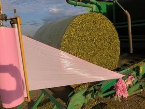 Precision chopped canola silage