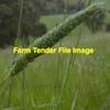 Phalaris Tuberosa (Australian) Seed in 25kg Bags