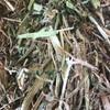 Balansa Clover & Rye Grass Hay in 8x4x3 Bales