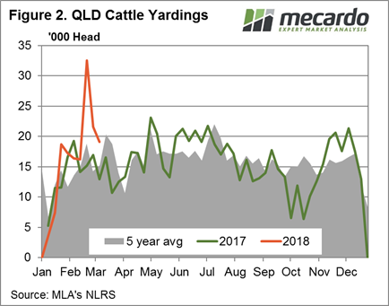 Cattle%202