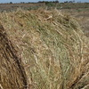 Clover/Rye Hay - Must sell