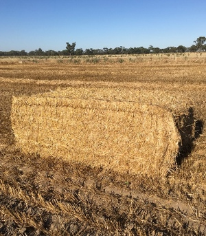 150mt Oaten Straw, header tailings, weed free, soft straw like barley.