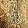 Barley Straw 8x4x3 1000 + x 480 KG Approx Bales.
