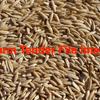 50/mt of Cleaned Winteroo Oat Seed