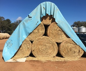 Wheat Hay Round Bales Corowa See Feed Test