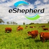 Video - Watch the eShepherd automated grazing controller