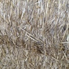 Wheaten straw (windrowed)