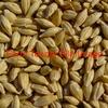 Feed Barley For Sale