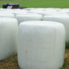 Prime Lucerne Silage Round Bales wrap x 24 times.