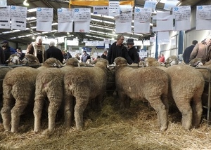 Bundaleer Merino's average $2052