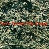 1st Cut New Season Lucerne Hay