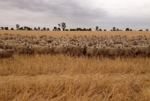 Farm Debt Mediation Bill today passing through the South Australian Parliament