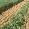 400 mt new seanson wheaten/ oaten and barley hay