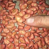 Cleanded Samira Faba Beens For Sale as Feed