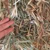 30 Bales of Wheaten Hay Shedded