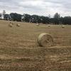 oaten/pasture hay