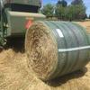 Rye oaten hay