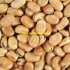 No 1 Beans x 500 m/t