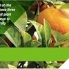 Cropsure Crop Treatment For Sale