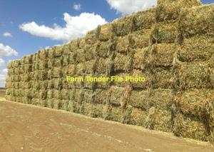 500 m/t New Season Wheaten Hay 8x4x3 600 Kg Bales