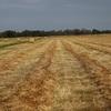 pure clover hay