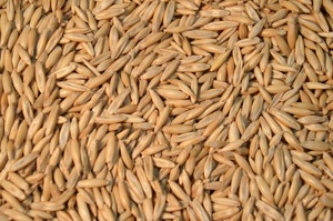 OATS SEED WANTED