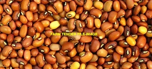 27/MT Red Caloona & Buff Cow Peas For Sale -  Farmer Dressed Bulk