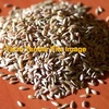 WANTED Phalaris Seed