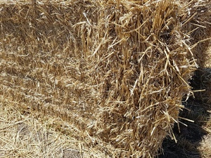 Wheaten Straw 8x4x3 - 300 x 420 KG Approx Bales