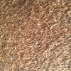 Mitika Oats (M1 Quality) Feed Oats x 220t