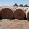 Wheaten Hay 5x4 Rolls