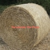 50 x Wheaten Hay 5x4 Bales + Freight (NSW Area Only)