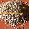 Phalaris Seed Wanted
