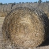200 x Round Bales of Balansa Clover and Ryegrass Hay