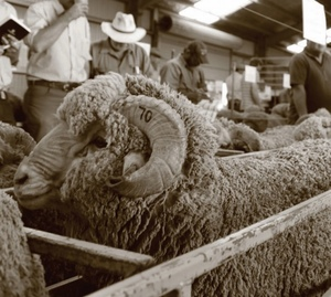 Hazeldean Monaro Sale averages $2839