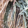 Oaten Hay for Sale in rolls and Squares - See test
