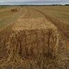 Oaten hay in 8x4x3 50 x 640 kg Bales Shedded