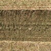 Clover hay (Balansa)