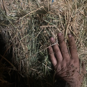 Lucerne Hay For Sae in 8x4x3